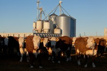 New feedlot photos added
