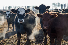 New feedlot gallery created