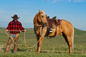 Cowboys / Ranching / Rodeo / Western