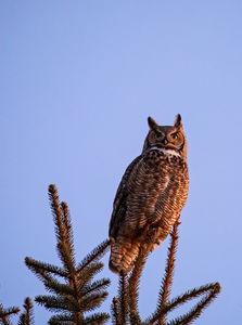 Wildlife / Nature 2