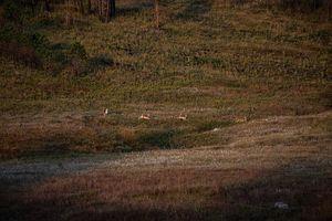 Wildlife / Nature 3