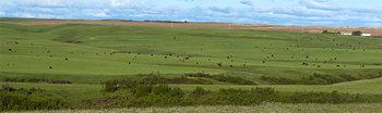 Cattle herd 14_cwpn_1243_52